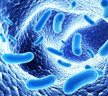 Can Probiotics Cure Cavities?